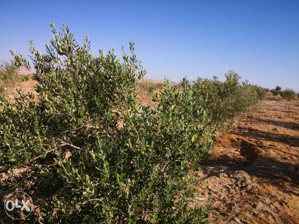 Introduction to Agriculture in Marsa Matrouh